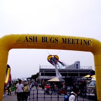 FLASH_BUGS_MEETING_2019_01.jpg